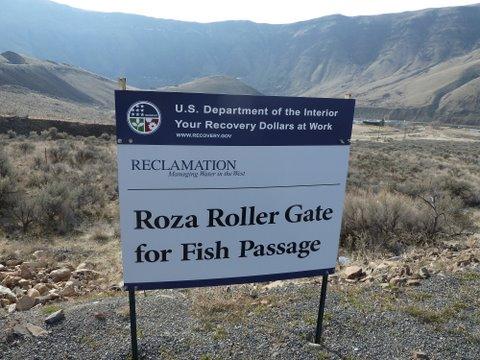 rozaRollerGate